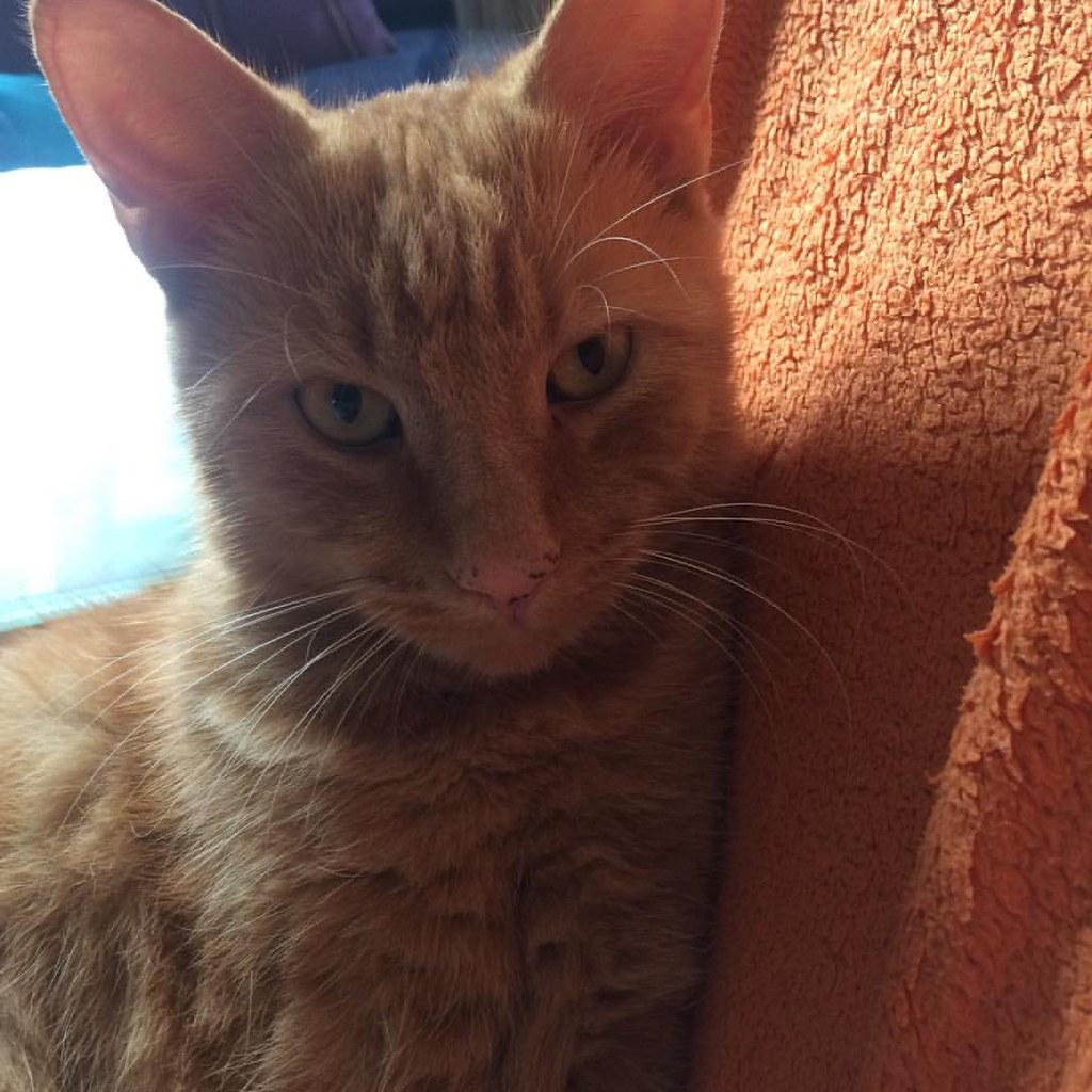 schön dass wir wieder daheim sind meint zumindest der #Garfield #myhomeismycastle #cat #instacat