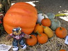 Teddy Tedaloo has a run-in with a pumpkin