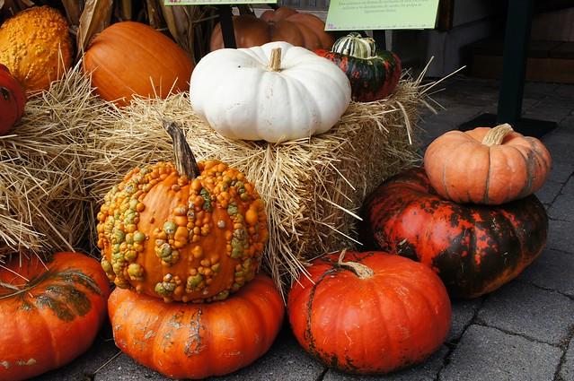 NYBG pumpkins 2015
