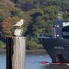 Ship Spotter by Hamburg PORTography