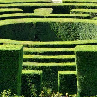 maze view
