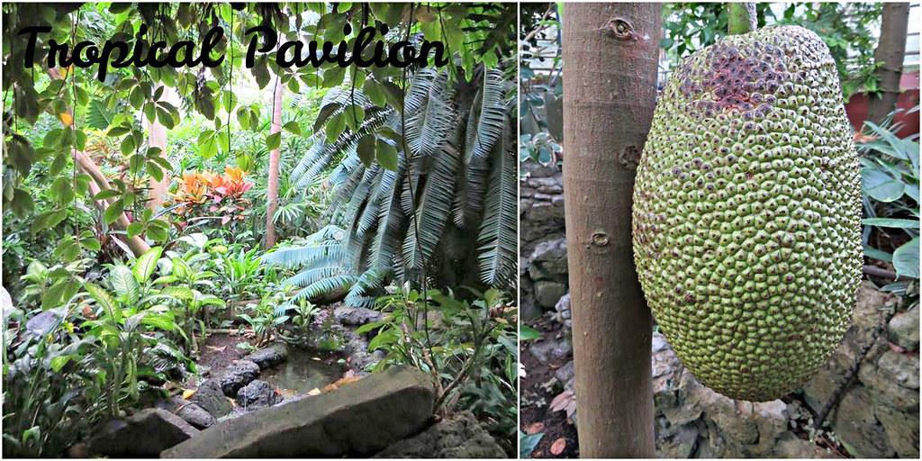 Tropical Pavilion -edit