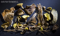Exotic Dried Mushrooms - The Mushroom Garden, Nant…