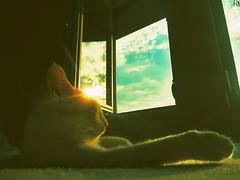 Cat 10 @specialcatsedition