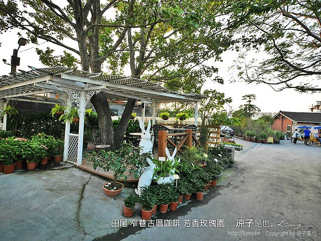 田尾 窄巷古厝咖啡 芳香玫瑰園 16