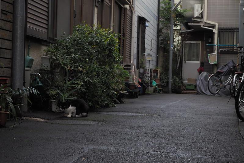 池袋ネコ歩きmini的なカメラ散歩。【池袋〜池袋本町〜板橋編】