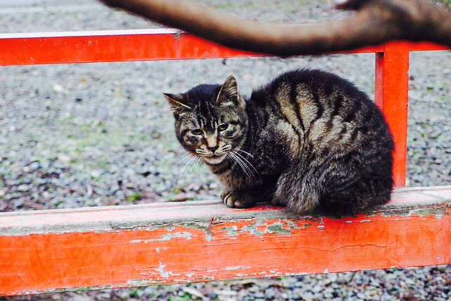 Today's Cat@2017-03-05