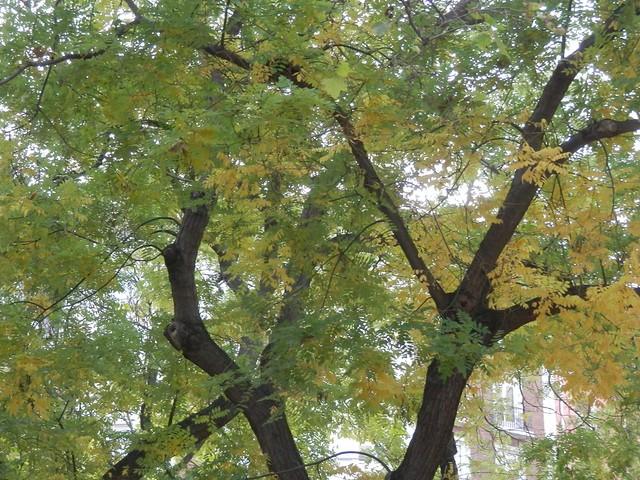 Árbol de la plaza
