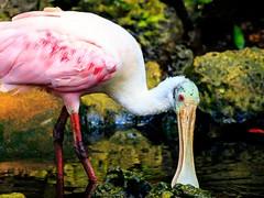 animal, water bird, nature, fauna, beak, bird, wildlife,