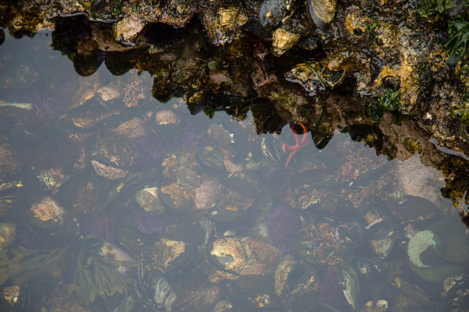 2015-08-24 Lake Sutherland-2976.jpg