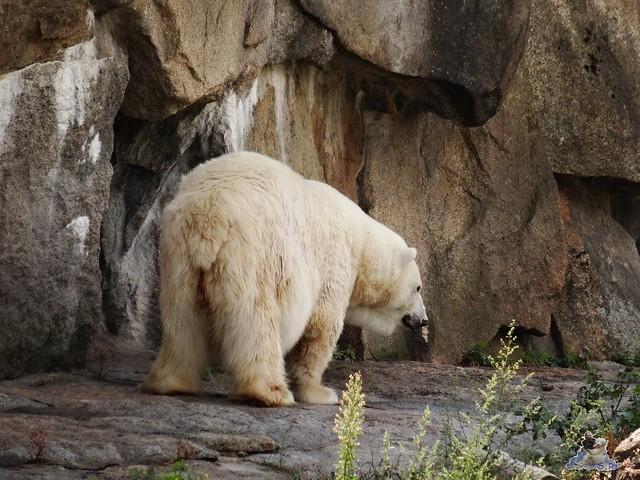 Zoo Berlin 28.08.2015  023