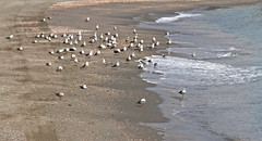 Seagulls on the Shore