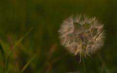 Weed pod1-0659