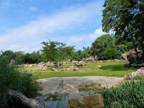 Kiwara Kopje, Zoo Leipzig