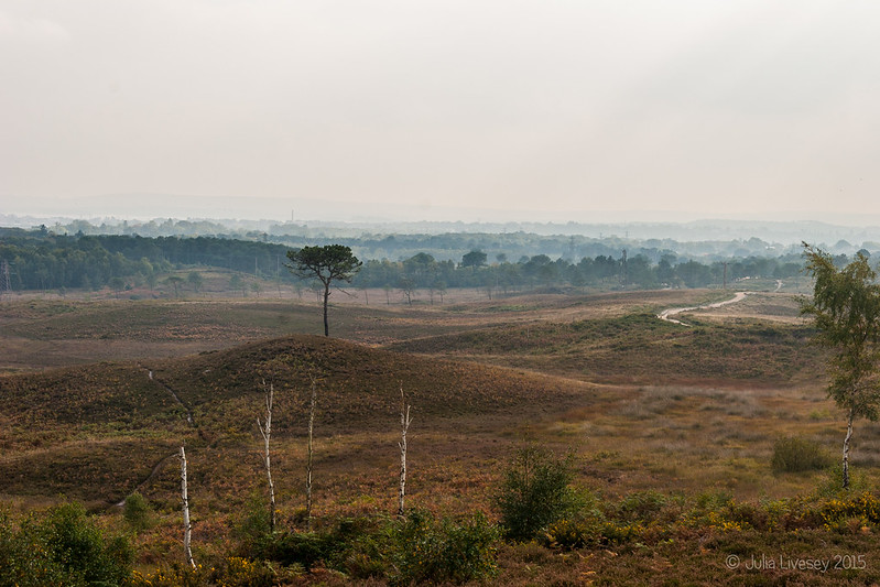 Looking across the heath
