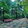 #fall #leaves #rainyday #afterthework #XanBağı #Ganja #Azerbaijan #az #nature