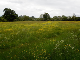 Godmanchester to St Ives 197: Houghton Meadows | by Peter O'Connor aka anemoneprojectors