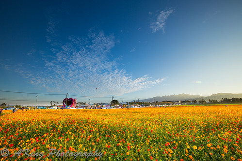 morning autumn sky cloud flower nature field sunrise landscape dawn countryside scenery taiwan landmark taichung 台灣 台中 花海 新社 日出 flowersea 晨