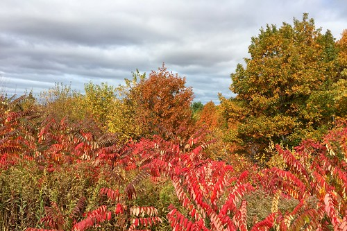 15. Fall color in Wisconsin