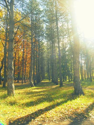 park november autumn trees sunlight fall nature leaves colorful random colored moldova sunnyday