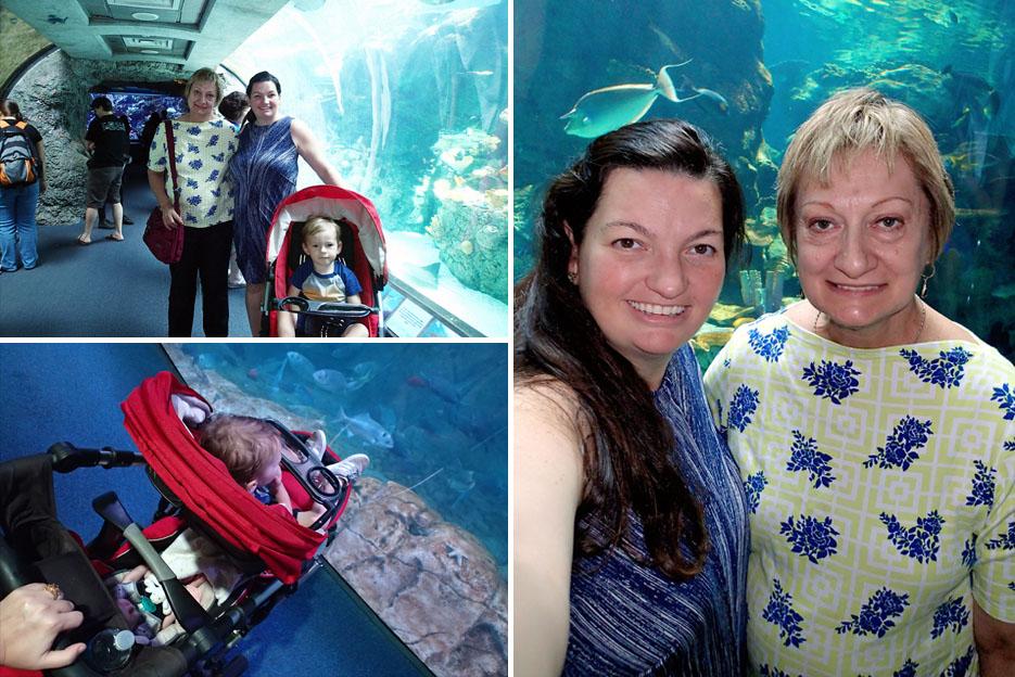 082115_aquarium11