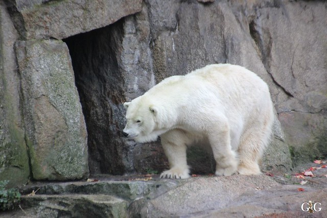 Herbsttag im Zoo Berlin 25.10.201518