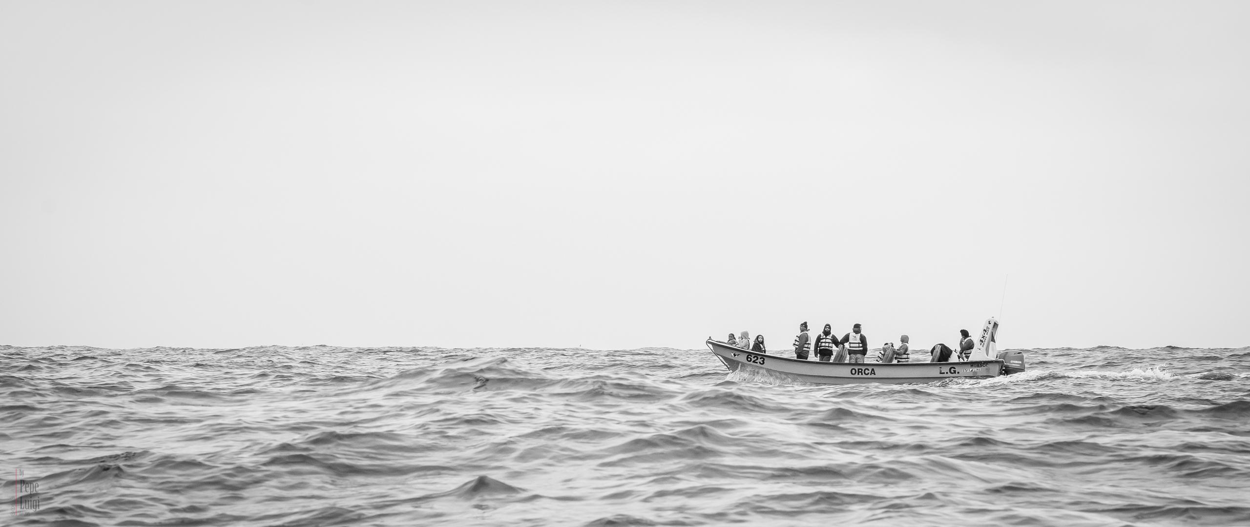 Avistamiento de Cetaceos | Isla Chañaral | Reserva Nacional Pingüino de Humboldt | Chañaral de Aceituno