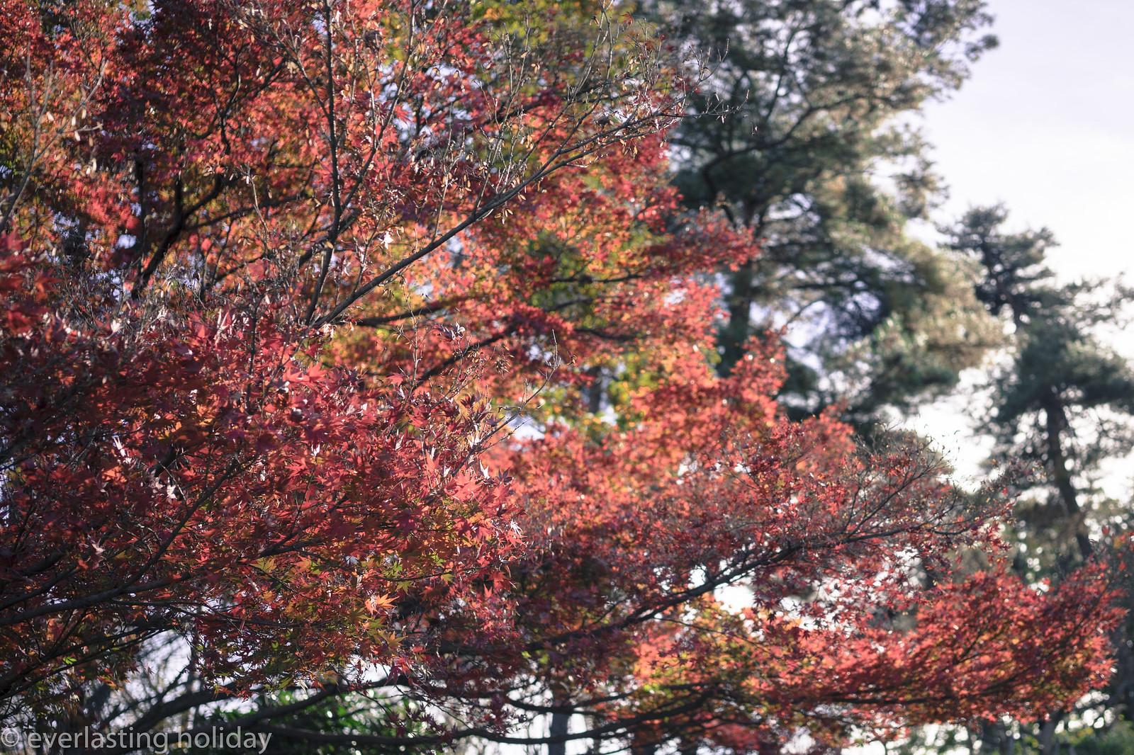 国営武蔵丘陵森林公園 Musashi Kyuryo National Government Park-0002