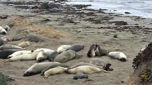 06_seals bunch