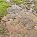 Cup and Ring Marked Rock Fereneze Hills Barrhead by James B Brown