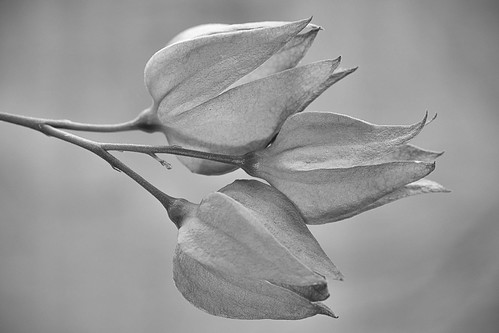 black and white for Macro Monday