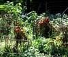 THOSE TOMATOES LOOK READY FOR PICKING by Visual Images1