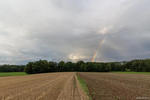 Champs et arc-en-ciel
