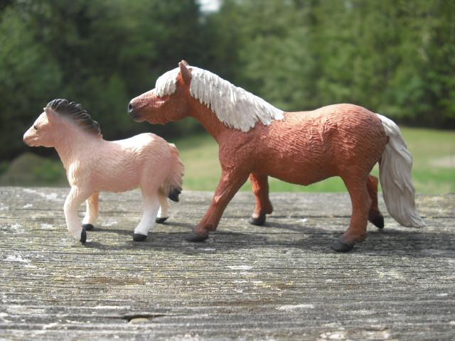 Shetland Pony Mare and Foal 20767503304_6cc58dc31a_z