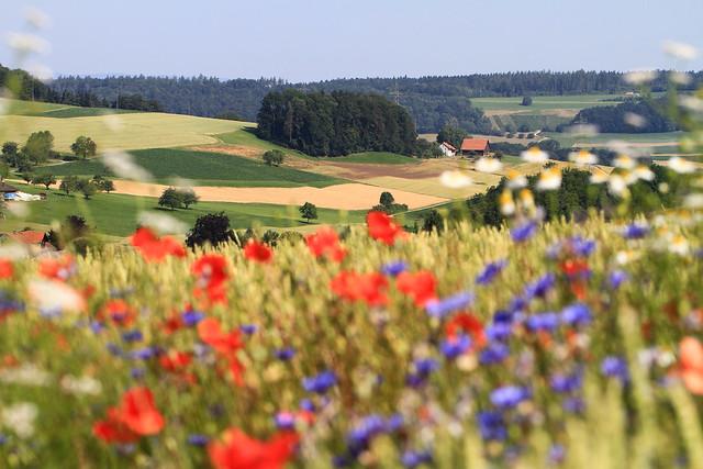 Vom Nutzen der Wildblumen - De l'utilité des fleurs sauvages