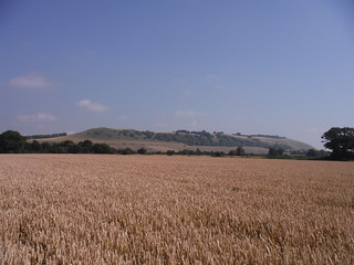 Oare Hill from nearby field
