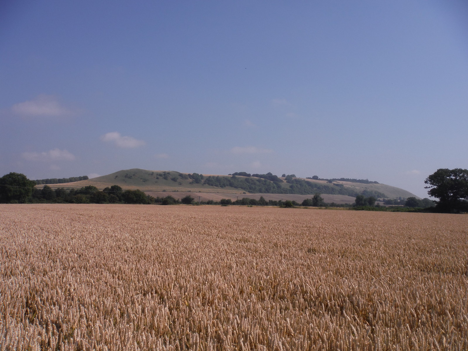 Oare Hill from nearby field SWC Walk 255 Pewsey or Marlborough Circular via Avebury