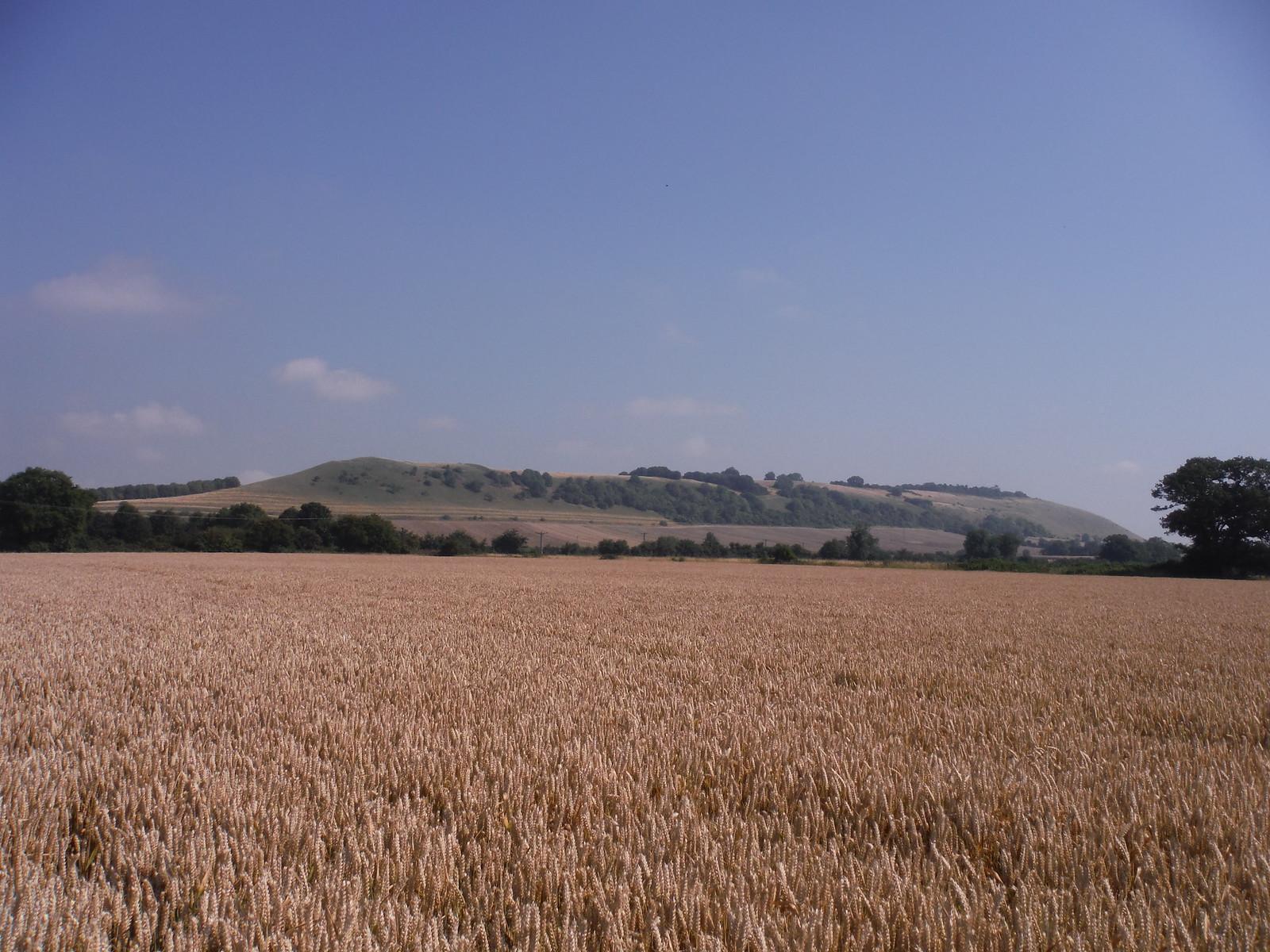 Oare Hill from nearby field SWC Walk 255 Pewsey or Marlborough Circular via Avebury