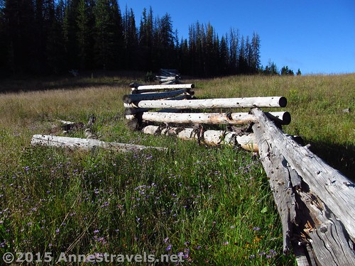 An early section of the fence dividing Shoshone National Forest and Bridger-Teton National Forest on the way up Lava Mountain near Togwotee Pass