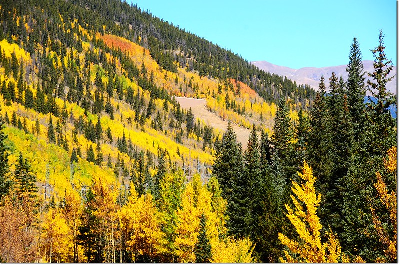 Fall colors at Guanella Pass, Colorado (43)