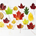 Just a little collection of autumn leaves :) by Sandra H-K