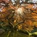 tree of life by Boyce 1