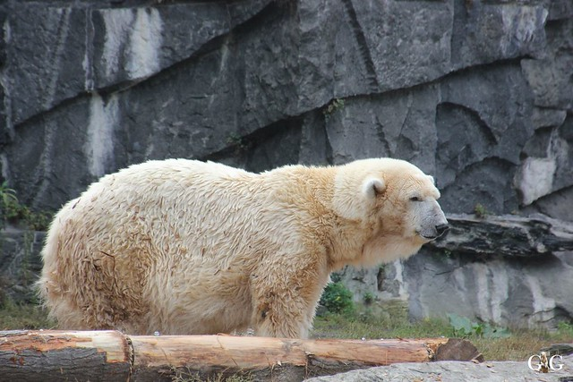 Sonntags-Besuch im Tierpark Friedrichsfelde 04.10.201512