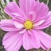 Still blooming :herb::grinning: