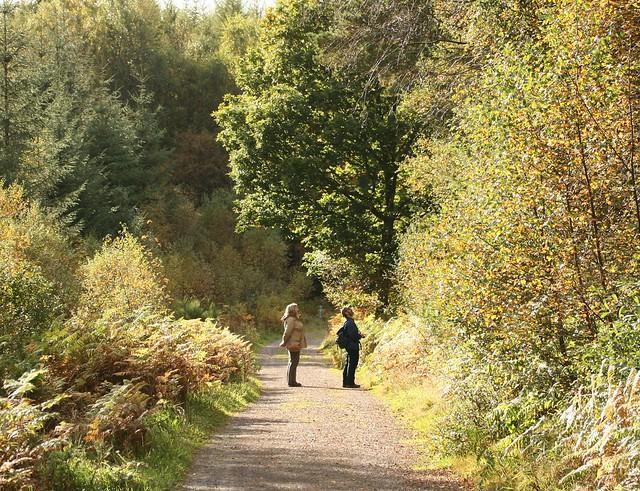 Dalbeattie Forest