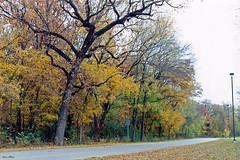 Fall Colors, River Legacy Park, Arlington, 1997