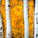 Autumn in Colorado by Paul Gana