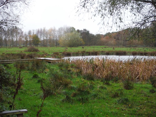 Pond in Flitton Moor, Flitton