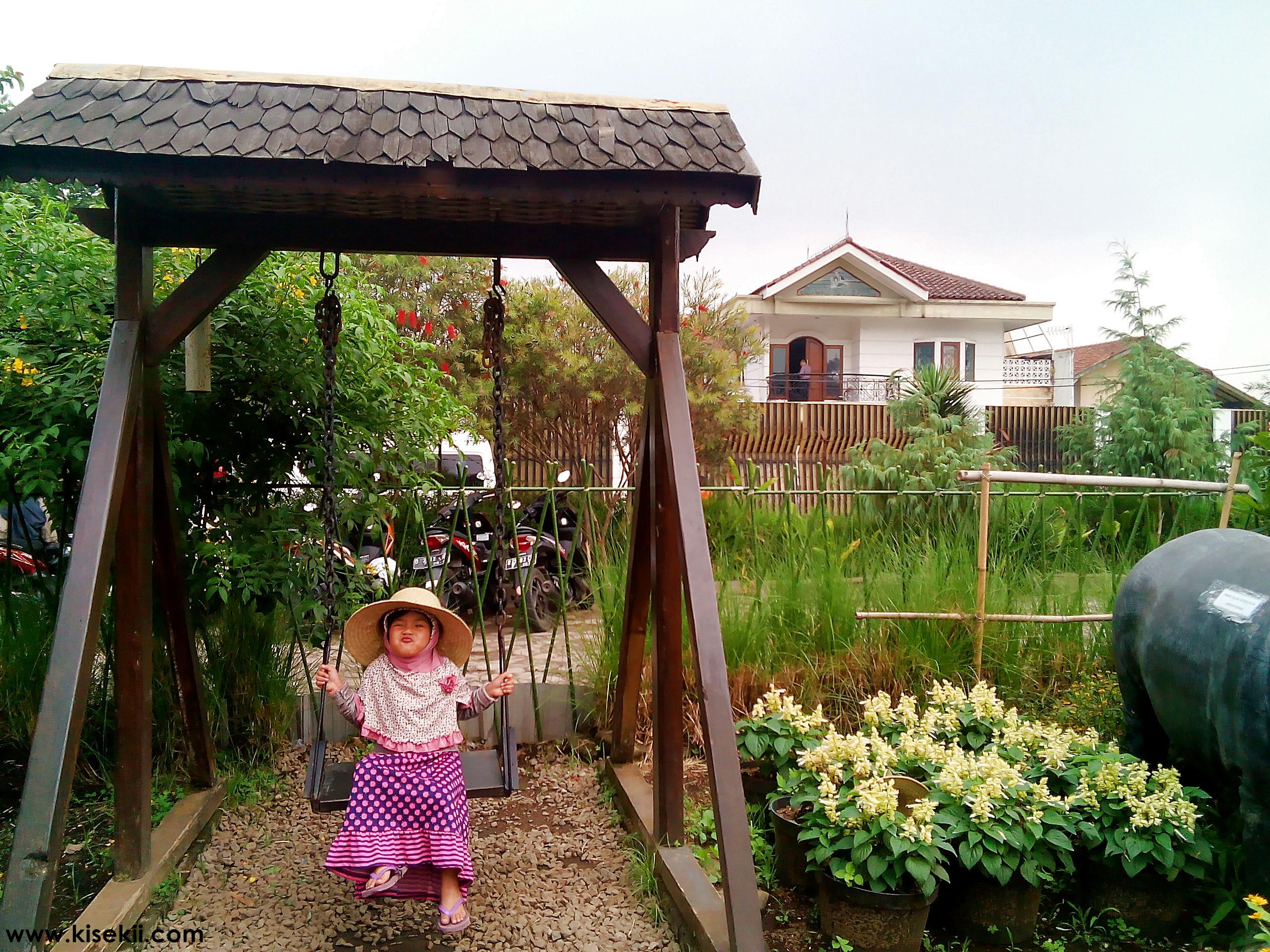 kebun-bunga-begonia-2