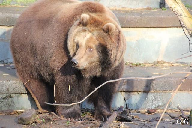 Besuch Zoo Rostock 12.12.201529